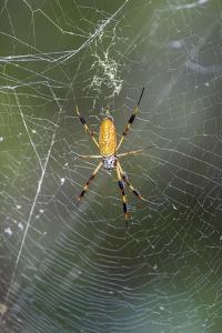 Orb Weaver - Arachnids by Gary Carter