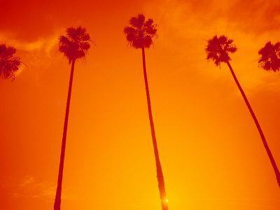 Row of Palm Trees, Santa Monica, CA