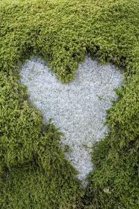 Love Heart Shape in Moss on Granite Bolder by Gary Cook