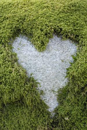 Love Heart Shape in Moss on Granite Bolder by Gary Cook