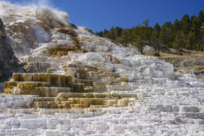 Palette Spring, Travertine Terraces, Mammoth Hot Springs, Yellowstone National Park, Wyoming by Gary Cook