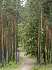 Path Through Pine Forest, Near Riga, Latvia, Baltic States, Europe by Gary Cook