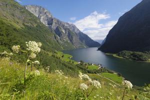 Wildflower Meadow Overlooking Naeroyfjorden, Sogn Og Fjordane, UNESCO World Heritage Site, Norway by Gary Cook