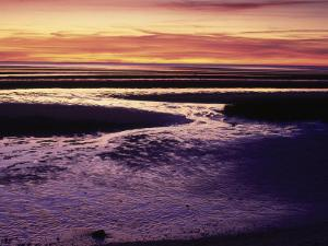 Tidal Flat at Sunset, Cape Cod, MA by Gary D. Ercole