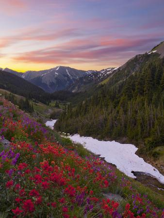 Badger Valley Sunrise, Olympic National Park, Washington, USA