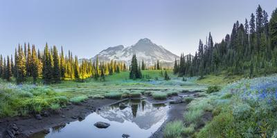 USA. Washington State. Mt. Rainier reflected in tarn amid wildflowers, Mt. Rainier National Park.