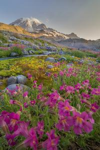 Washington, Lewis's Monkeyflower Along Panorama Trail and Paradise River, Mt. Rainier National Park by Gary Luhm