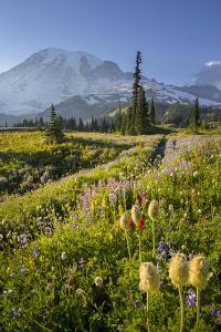 Washington, Subalpine Pasque Flower, Paintbrush and Lupine Wildflowers and Mt. Rainier by Gary Luhm