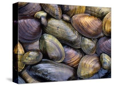 Freshwater Mussels from the Ohio River Drainage, USA by Gary Meszaros