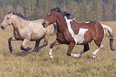 Running Horses by Gary Samples