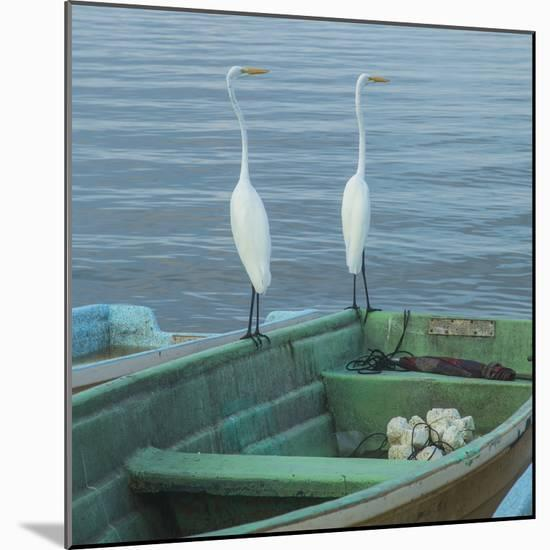 Garzas-4-2-Moises Levy-Mounted Photographic Print