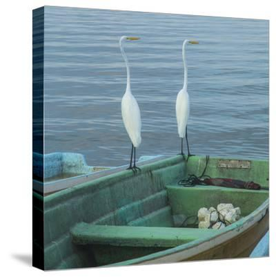 Garzas-4-2-Moises Levy-Stretched Canvas Print