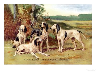 Gascon-Saintongeois Hounds of the Virelade Type-Baron Karl Reille-Art Print