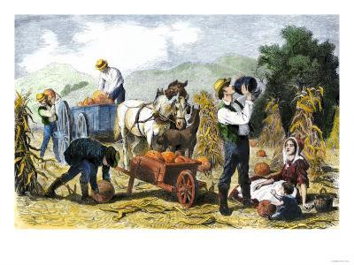 Gathering Pumpkins, an October Scene in New England, c.1860--Giclee Print