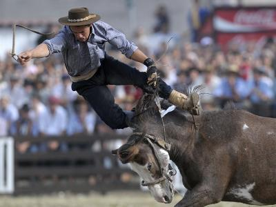 Gaucho, or Cowboy, is Thrown from a Horse as He Competes in a Rodeo in Montevideo--Photographic Print