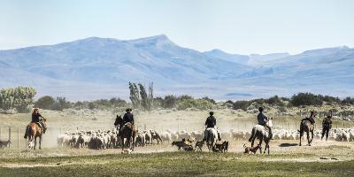 Gauchos Riding Horses to Round Up Sheep, El Chalten, Patagonia, Argentina, South America-Matthew Williams-Ellis-Photographic Print