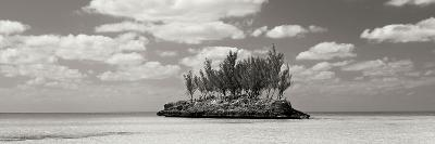 Gaulding Cay Conch BW Panel-Larry Malvin-Photographic Print