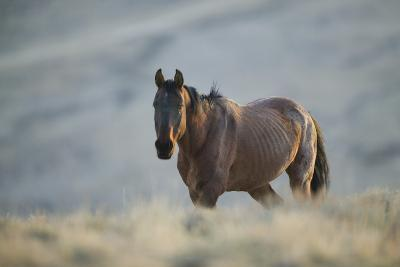 Gaunt Wild Horse on the Range-DLILLC-Photographic Print