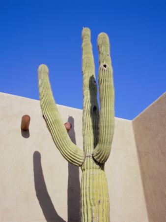 Giant Cactus, Scottsdale, Arizona, USA. North America