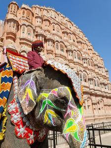 India, Rajasthan, Jaipur, Ceremonial Decorated Elephant Outside the Hawa Mahal, Palace of the Winds by Gavin Hellier