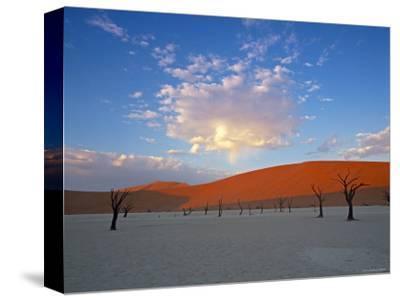 Red dunes and dead acacia tree, Dead Vlei, Namib-Naukluft-Sossusvlei, Namibia