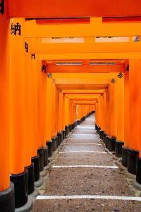 Red Torii Gates, Fushimi Inari Taisha Shrine, Kyoto, Kansai Region, Honshu, Japan, Asia by Gavin Hellier