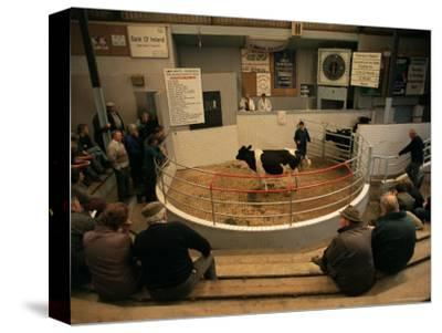 Skibbereen Cattle Auctions, County Cork, Munster, Eire (Republic of Ireland)