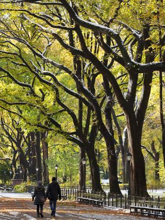 The Mall and Literary Walk with American Elm Trees Forming the Avenue Canopy, New York, USA