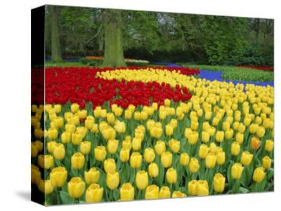 Tulips, Keukenhof Gardens, Netherlands