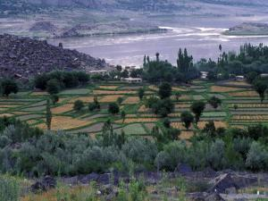 Agriculture Fields, Indus Valley, Pakistan by Gavriel Jecan