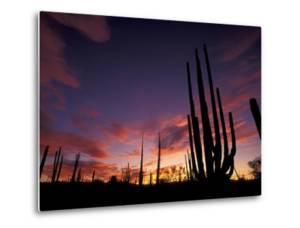 Bojum Tree and Cardon Cactus, Catavina Desert National Reserve, Baja del Norte, Mexico by Gavriel Jecan