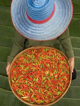 Farmer Selling Chilies, Isan region, Thailand