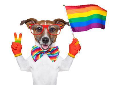 https://imgc.artprintimages.com/img/print/gay-pride-dog_u-l-q1039ws0.jpg?p=0