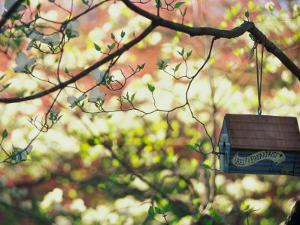 Backyard Bird Feeder, Birdhouse and Spring Flowers by Gayle Harper