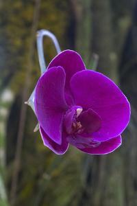 Orchid in Hawaii Botanical Garden, Big Island, Hawaii by Gayle Harper