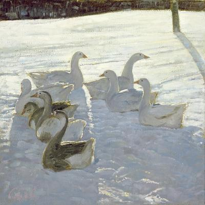Geese Against the Light-Timothy Easton-Giclee Print
