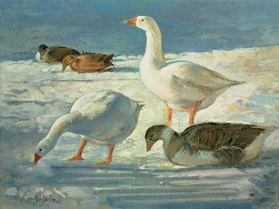 Geese and Mallards, 2000-Timothy Easton-Giclee Print