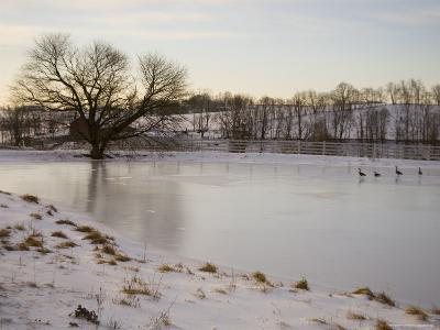 Geese Explore the Frozen Surface of a Country Pond-Stephen St^ John-Photographic Print