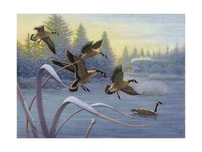 Geese on Winter Lake--Art Print