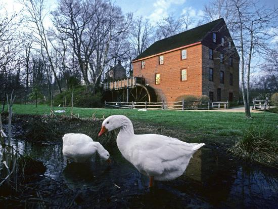 Geese Wading in Front of Colvin Run Mill, Colvin Run Mill, Great Falls, Virginia-Annie Griffiths Belt-Photographic Print