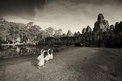 Geese Walk on the Grounds of the 12th Century Temple, Bayon-Jim Richardson-Photographic Print