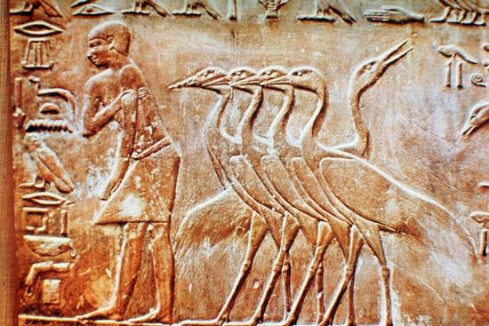 Geese, wall relief from the Tomb of Ptahhotep, Saqqara, Egypt, 24th century BC. Artist: Unknown-Unknown-Giclee Print