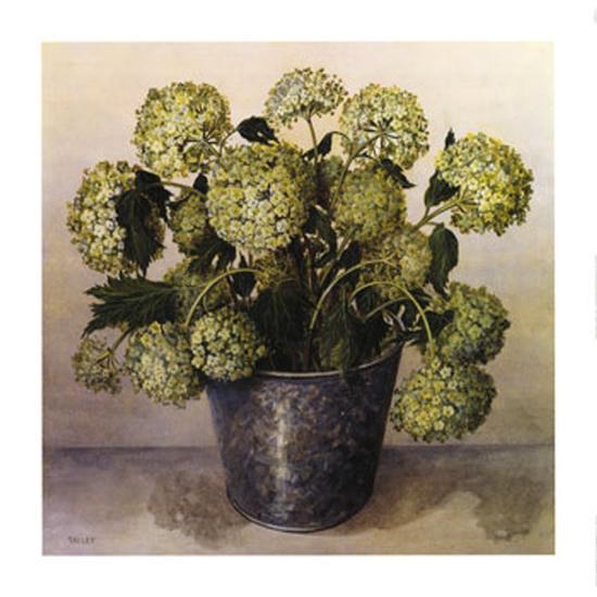 Gelder Rose in Florist Vase-Galley-Art Print