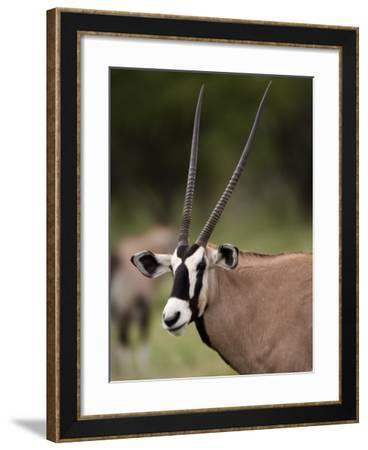 Gemsbok, Etosha National Park, Kunene, Namibia-Ariadne Van Zandbergen-Framed Photographic Print