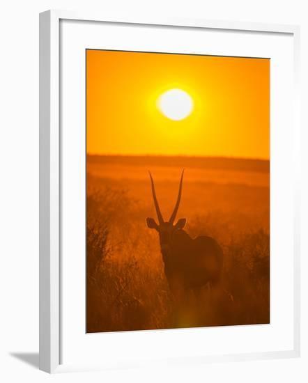 Gemsbok (Oryx Gazella) Silhouetted At Dawn, Kalahari Desert, Botswana-Juan Carlos Munoz-Framed Photographic Print