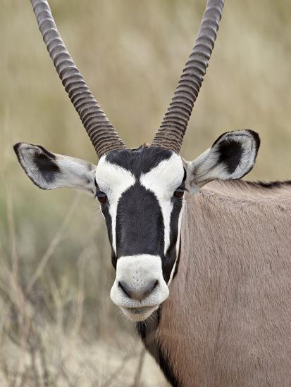 Gemsbok (South African Oryx) (Oryx Gazella), Kgalagadi Transfrontier Park, Encompassing the Former -James Hager-Photographic Print