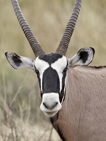 https://imgc.artprintimages.com/img/print/gemsbok-south-african-oryx-oryx-gazella-kgalagadi-transfrontier-park-encompassing-the-former_u-l-pfwbxg0.jpg?p=0