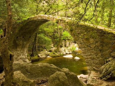 Genoan Bridge in Vegetation of Gorges De Spelonca, Ponte De Zaglia, Corsica, France-Trish Drury-Photographic Print