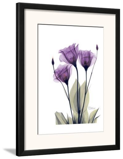 Gentian Hope-Albert Koetsier-Framed Art Print