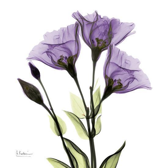 Gentian in Purple-Albert Koetsier-Art Print